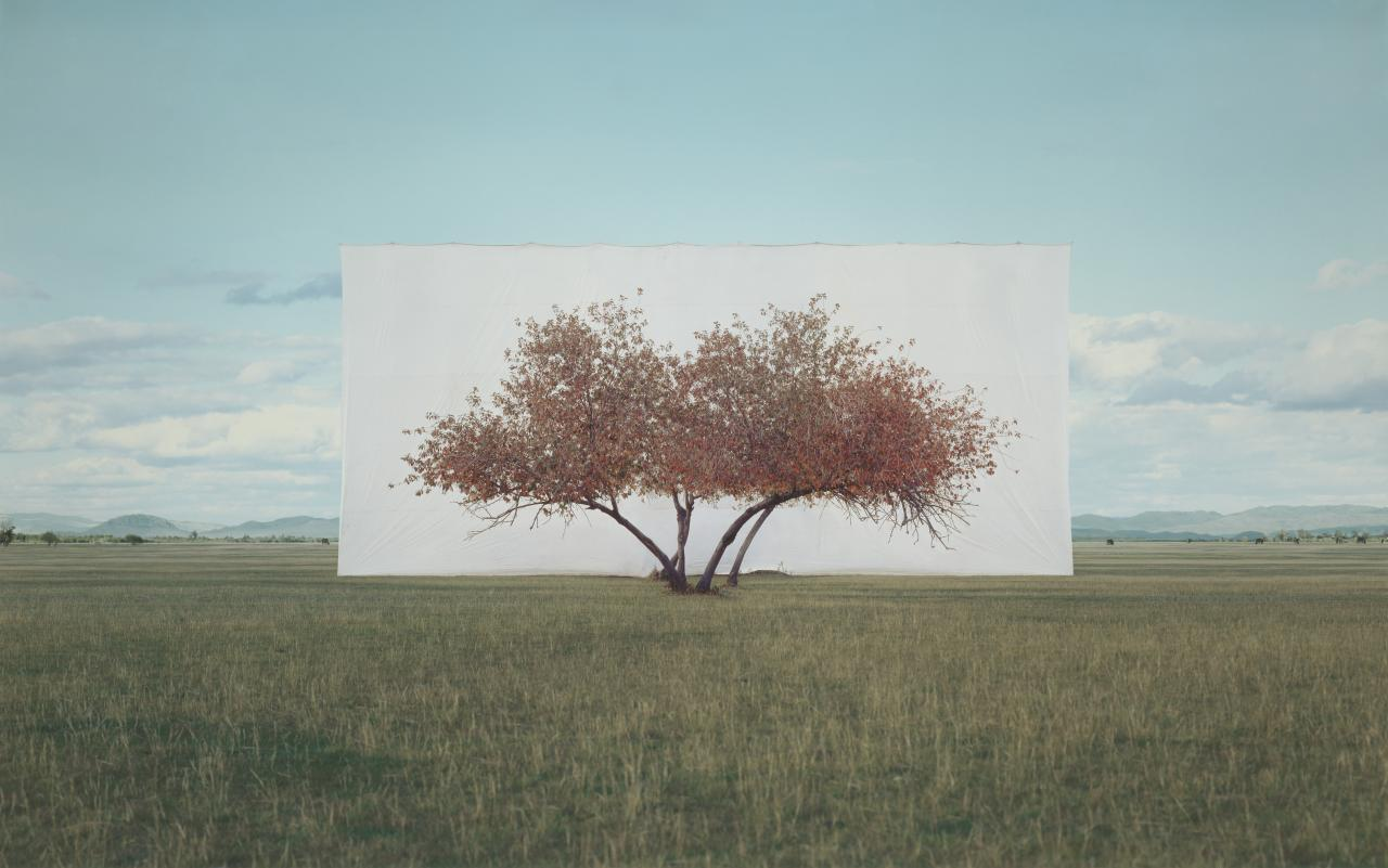Myoung Ho LEE Tree… #2 (2011)