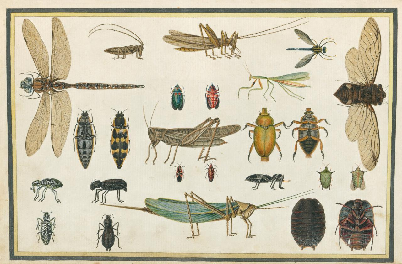 Richard Browne (illustrator) Insects 1813