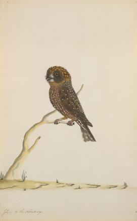THE SYDNEY BIRD PAINTER