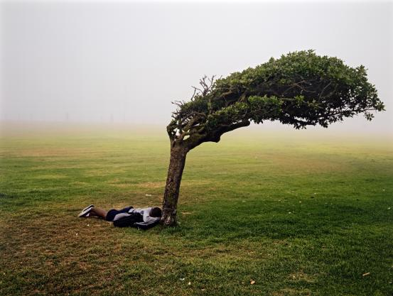 A grassy field, with a person laying face down beside a tree