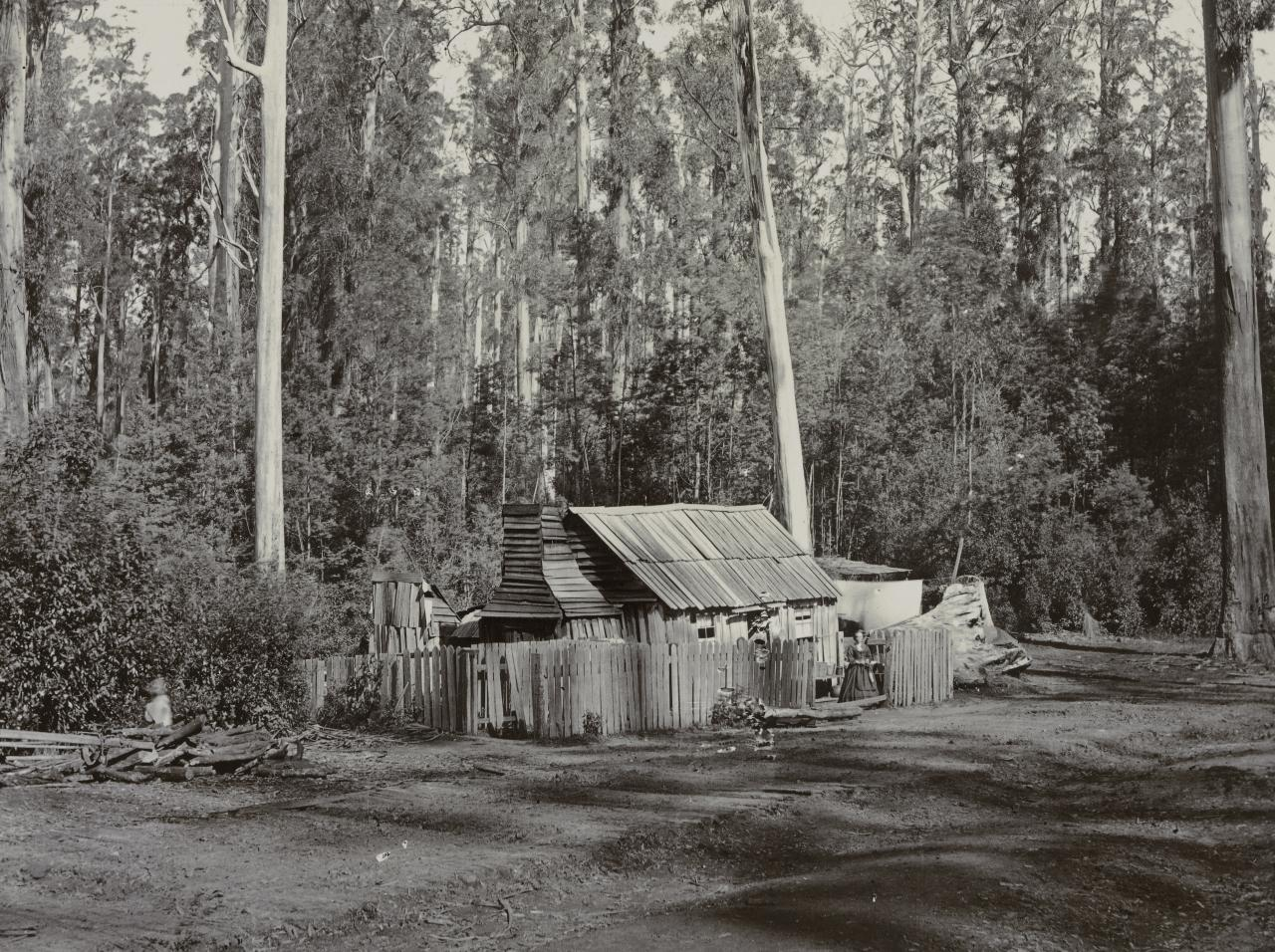 Bush cottage, Blacks' Spur