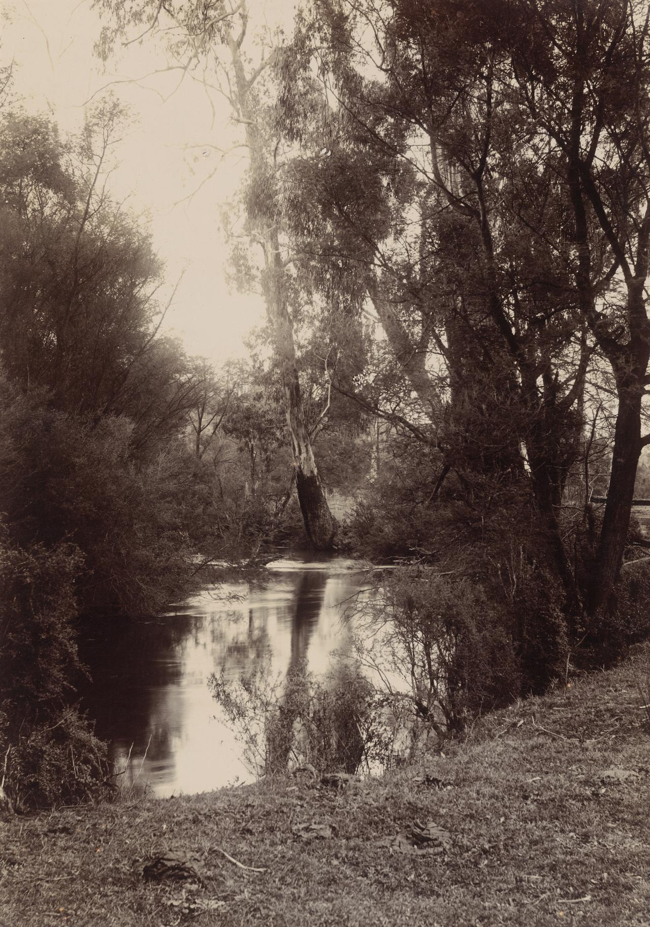 Scene on the Yarra, Healesville