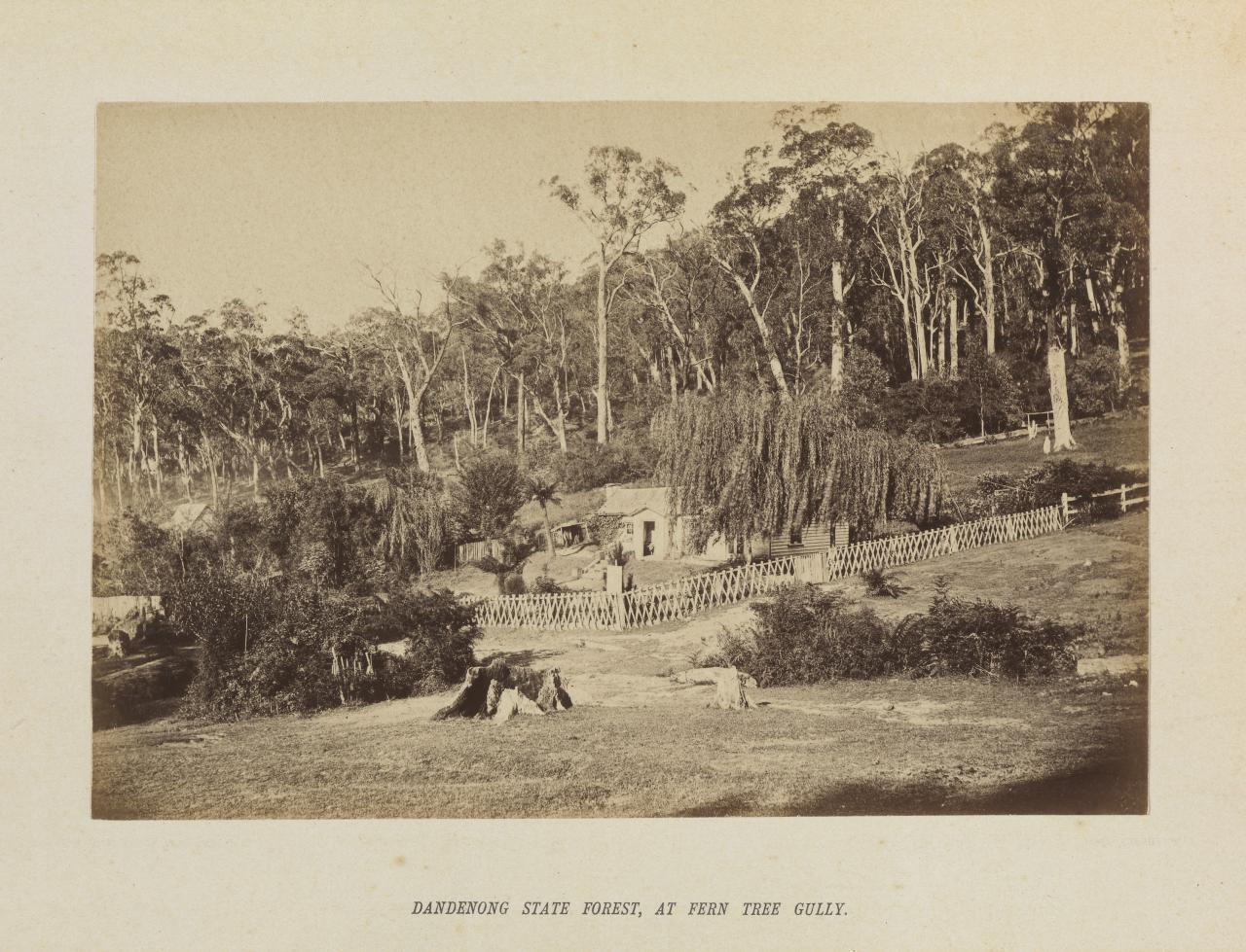 Dandenong State Forest, at Fern Tree Gully