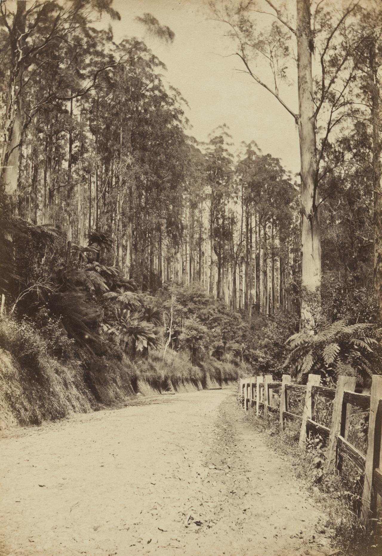 Roadway scene on the Black Spur