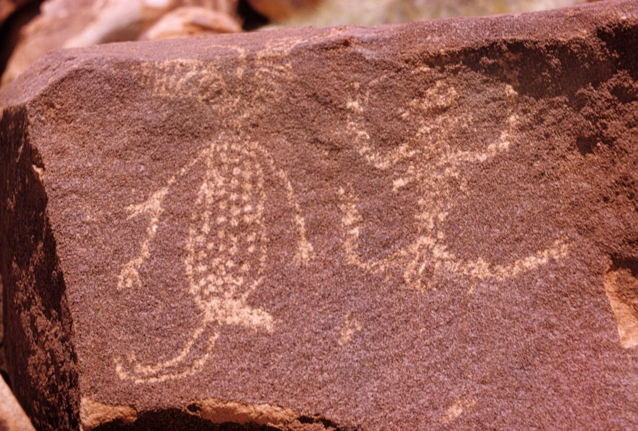 No title (Male and female, Aboriginal Rock Art, Gallery Hill, Western Australia, Friday 17th October 1958)