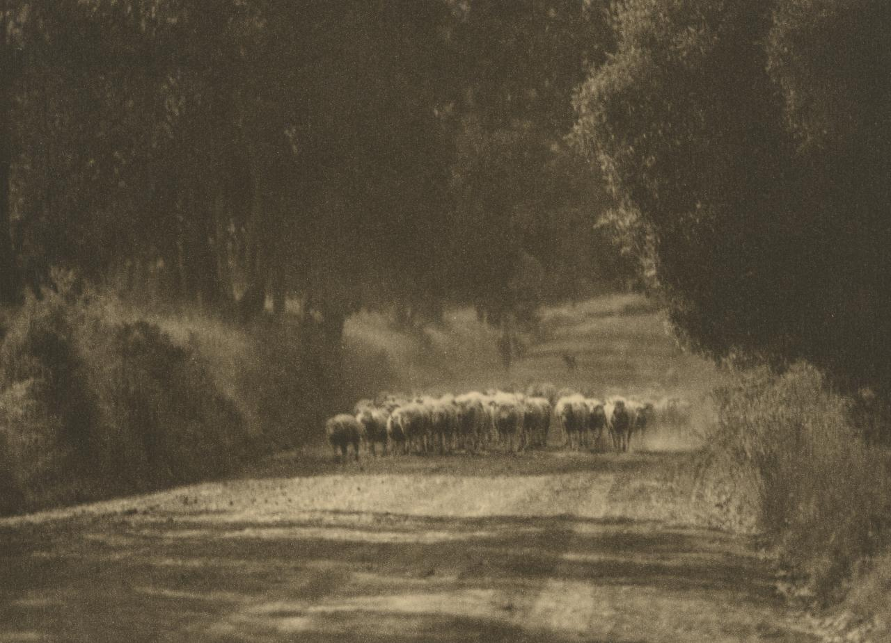 No title (Flock of sheep on country road)