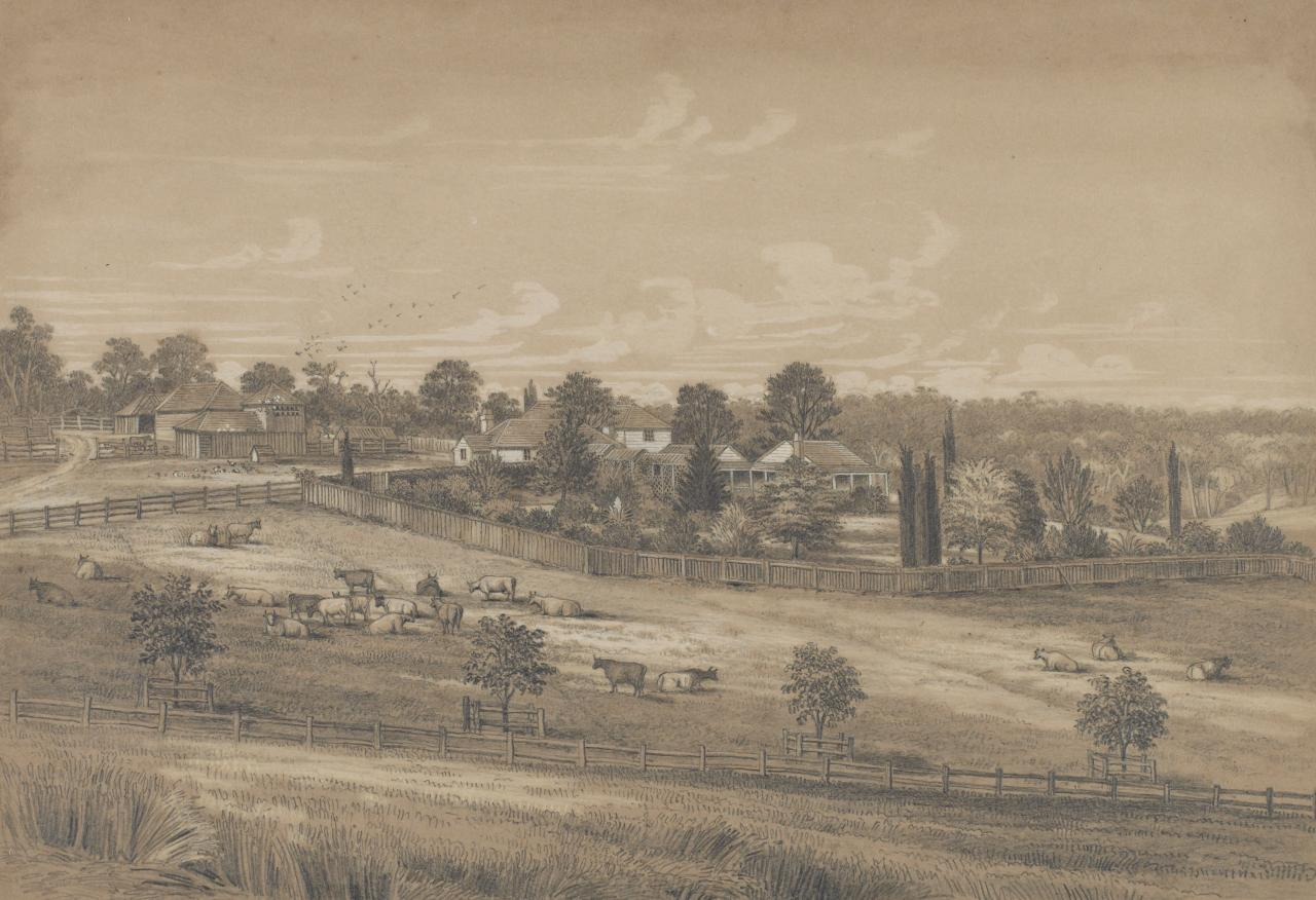 View of the Station Plenty, Port Phillip district (I Distant view of station with cattle in foreground)