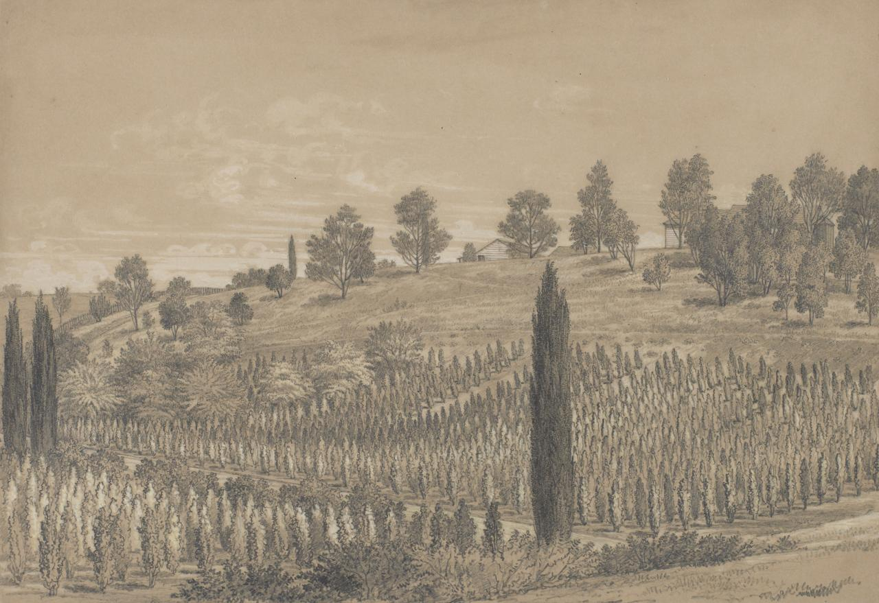 View of the Station Plenty, Port Phillip district (VII Plantation of Lombardy poplars)