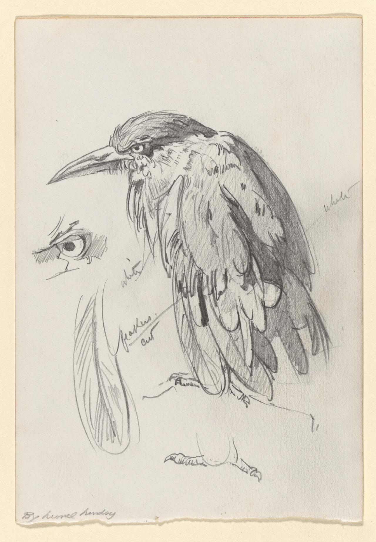 Study for The clipped wing