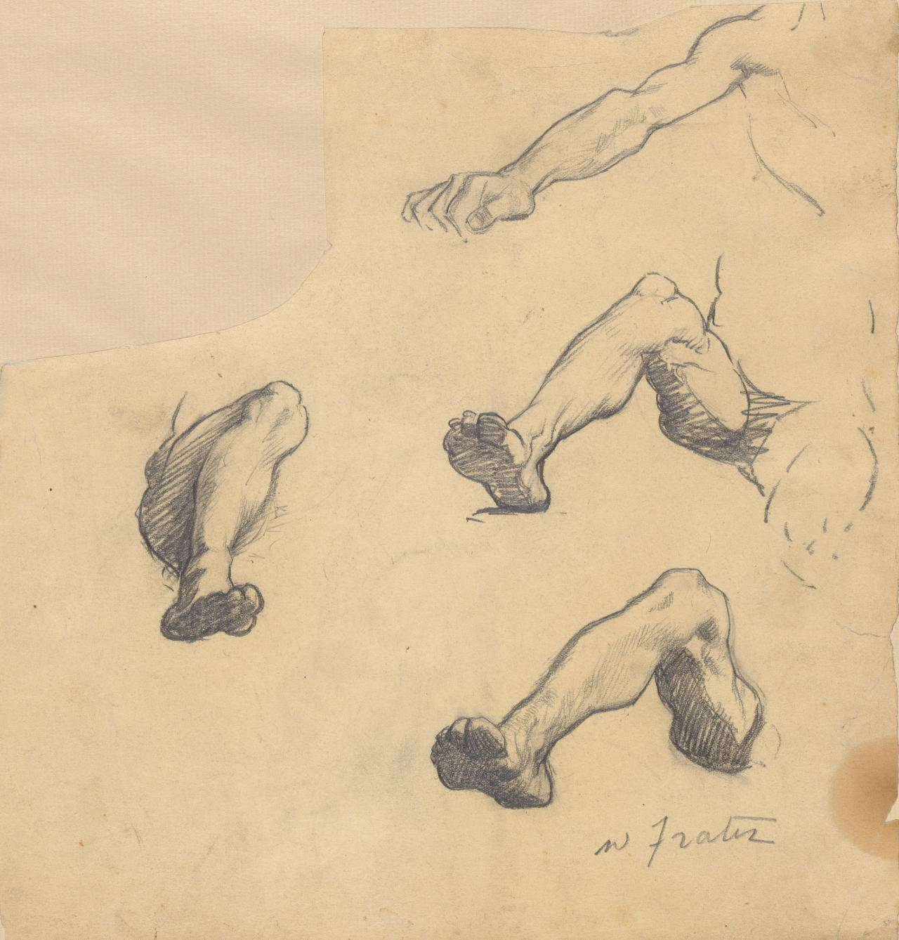 Sheet of studies (legs and arms)