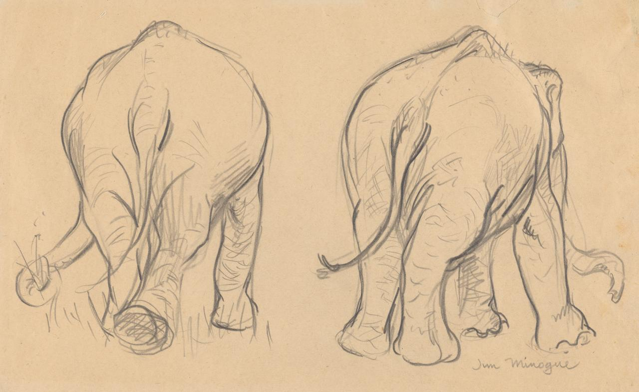 Two studies of an elephant, rear view