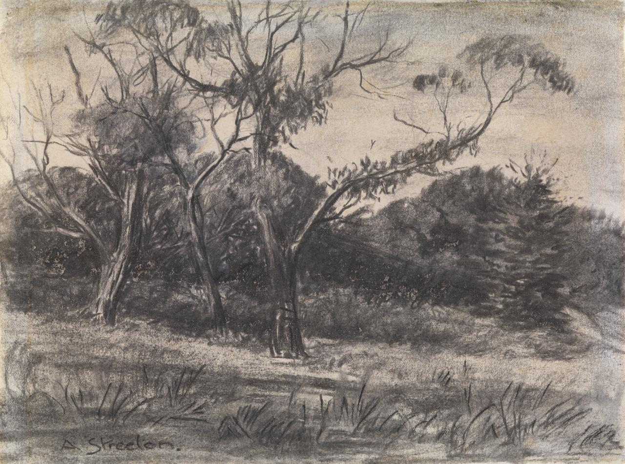 Untitled (Study of trees)