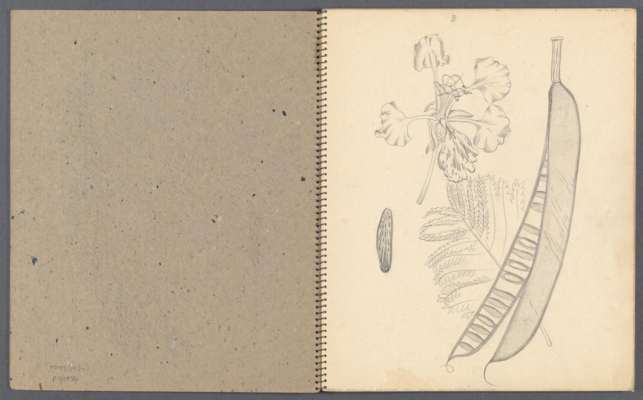 Sketchbook - Botanical drawings, landscape