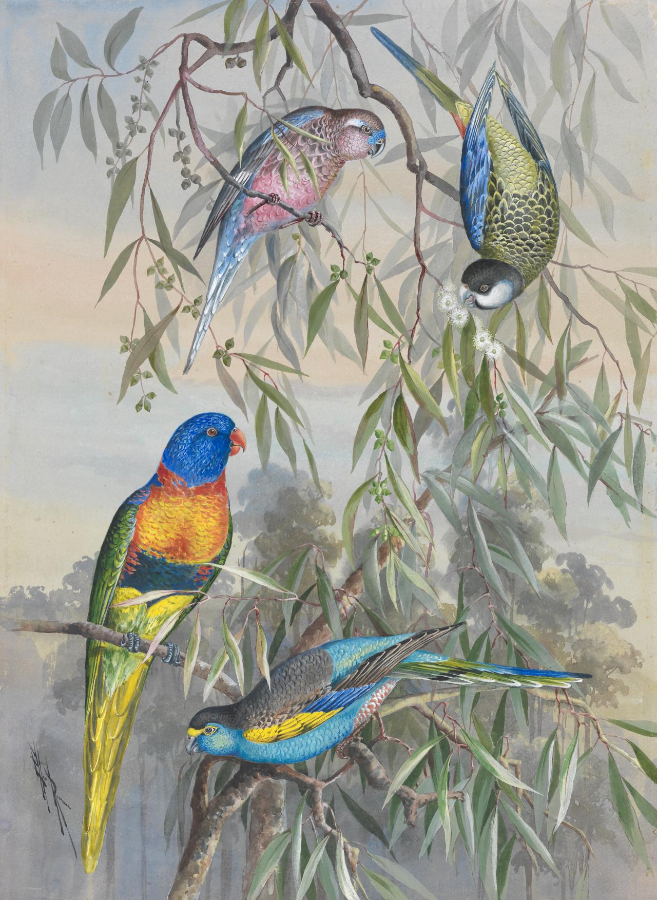 Four parrakeets in a gum tree