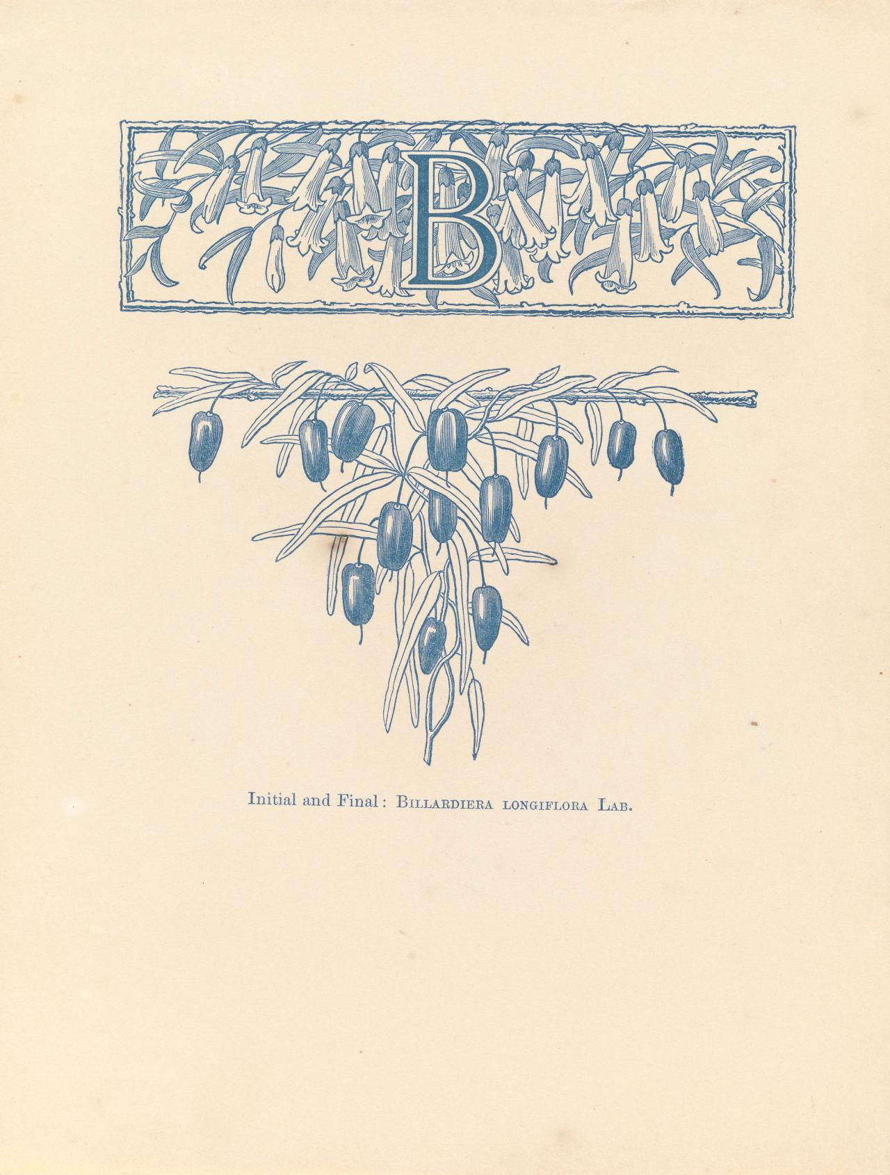B initial and final: Billardiera longiflora