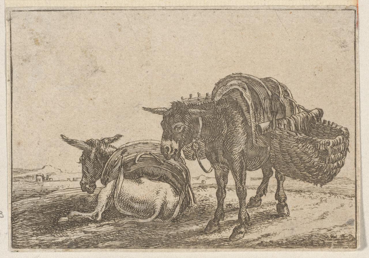 Untitled (Study of asses) Alcune Animali