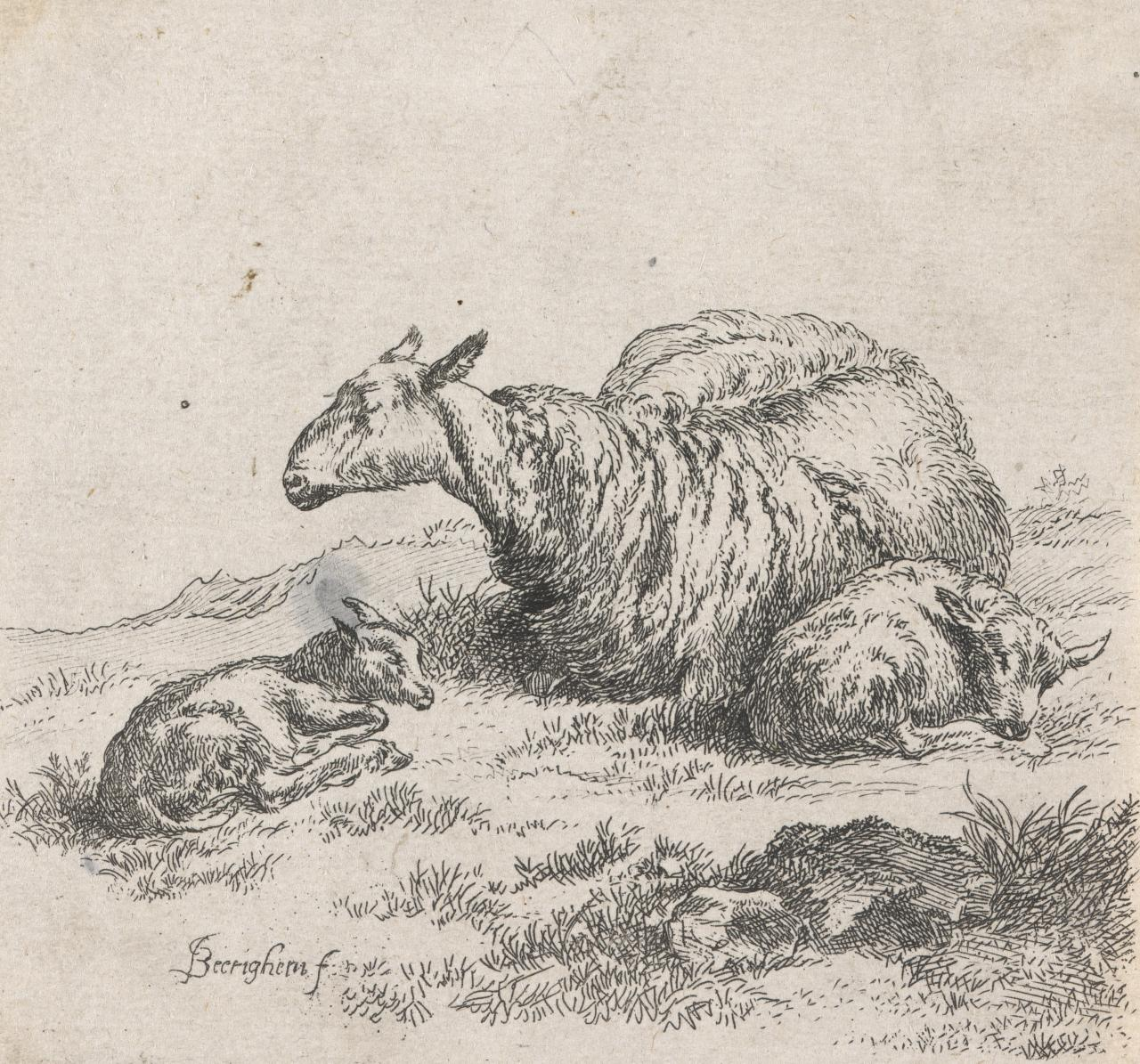 A reclining ewe with two lambs