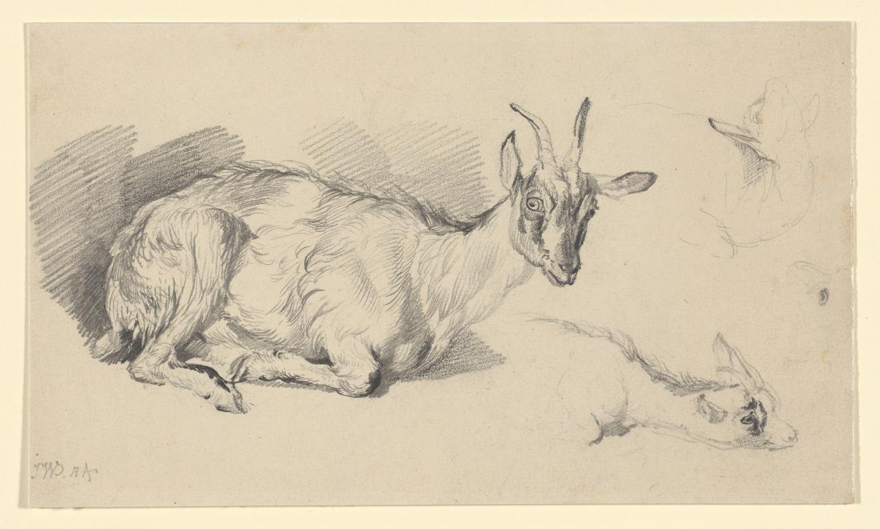 Studies of goats
