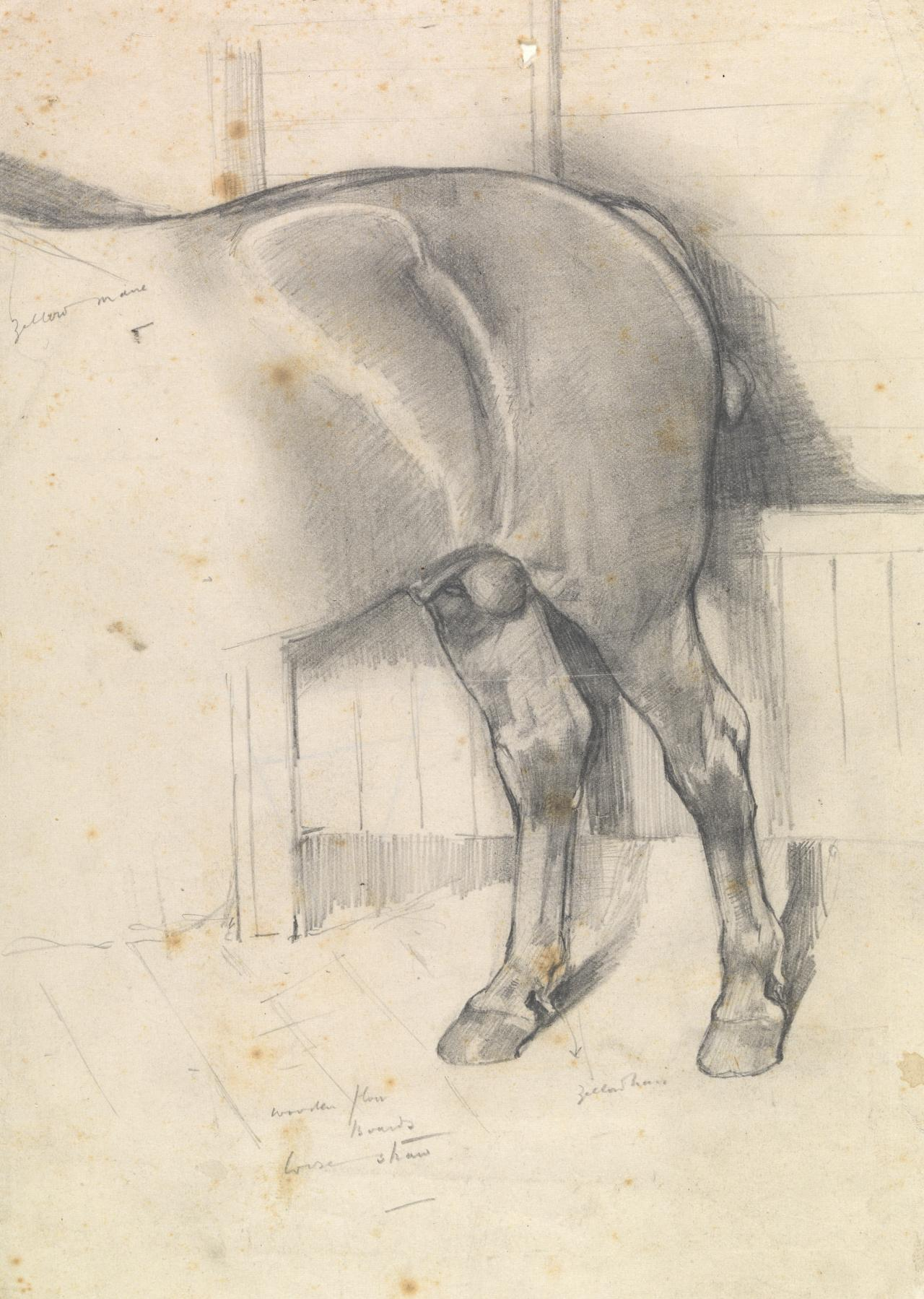 Hindquarters of Suffolk Punch stallion