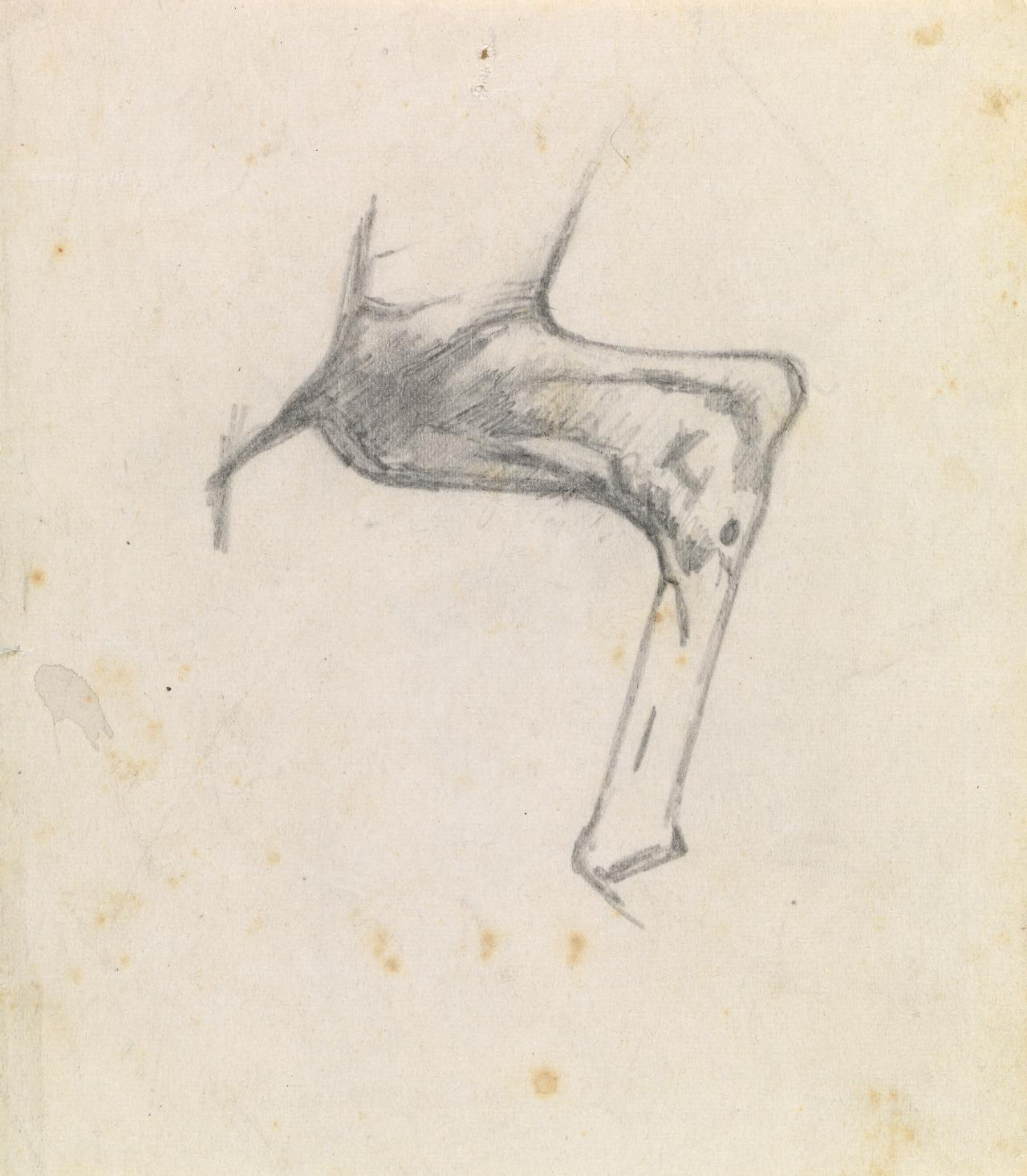 Study of horse's hind leg
