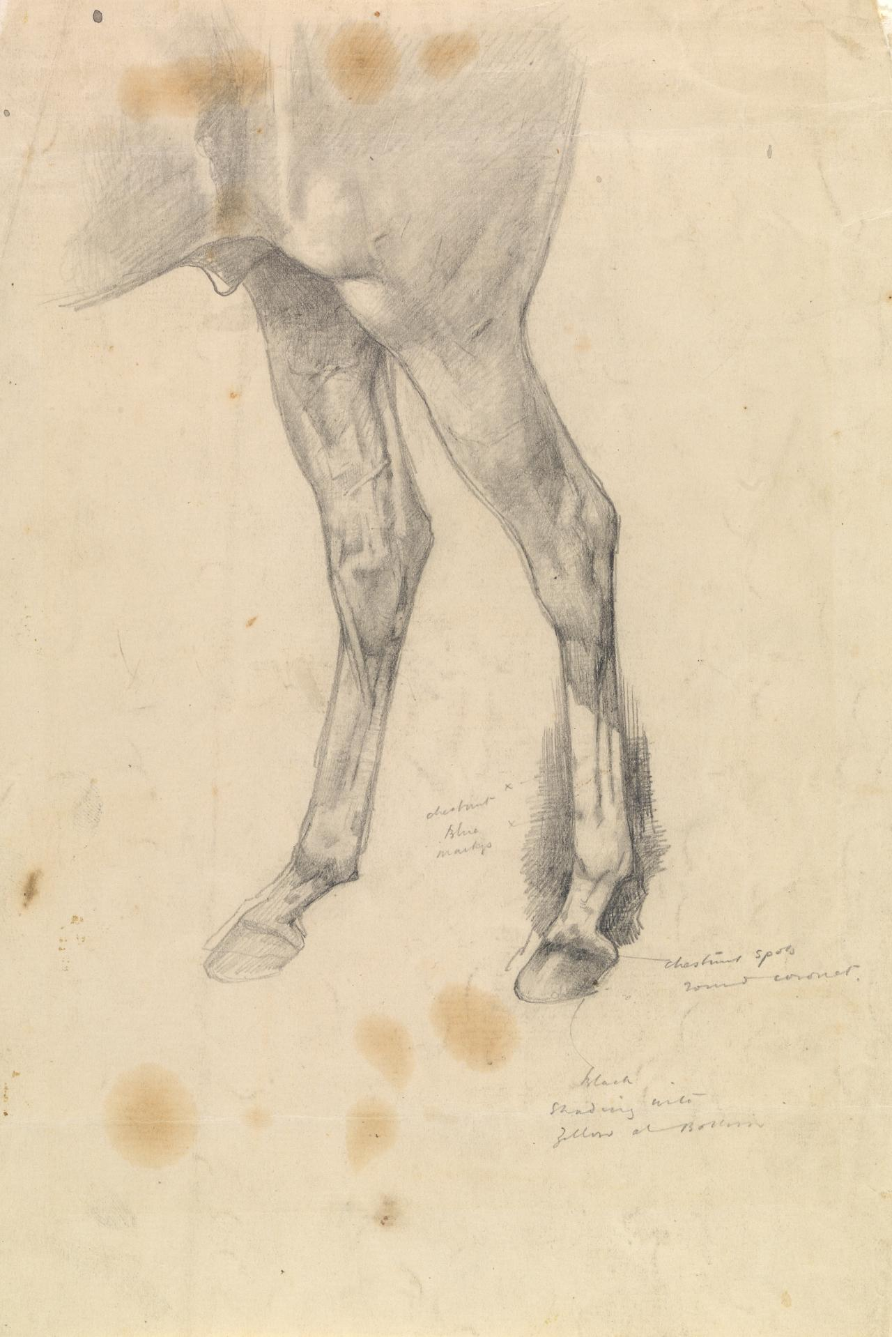 Study of the hind legs of a horse Eurythmic