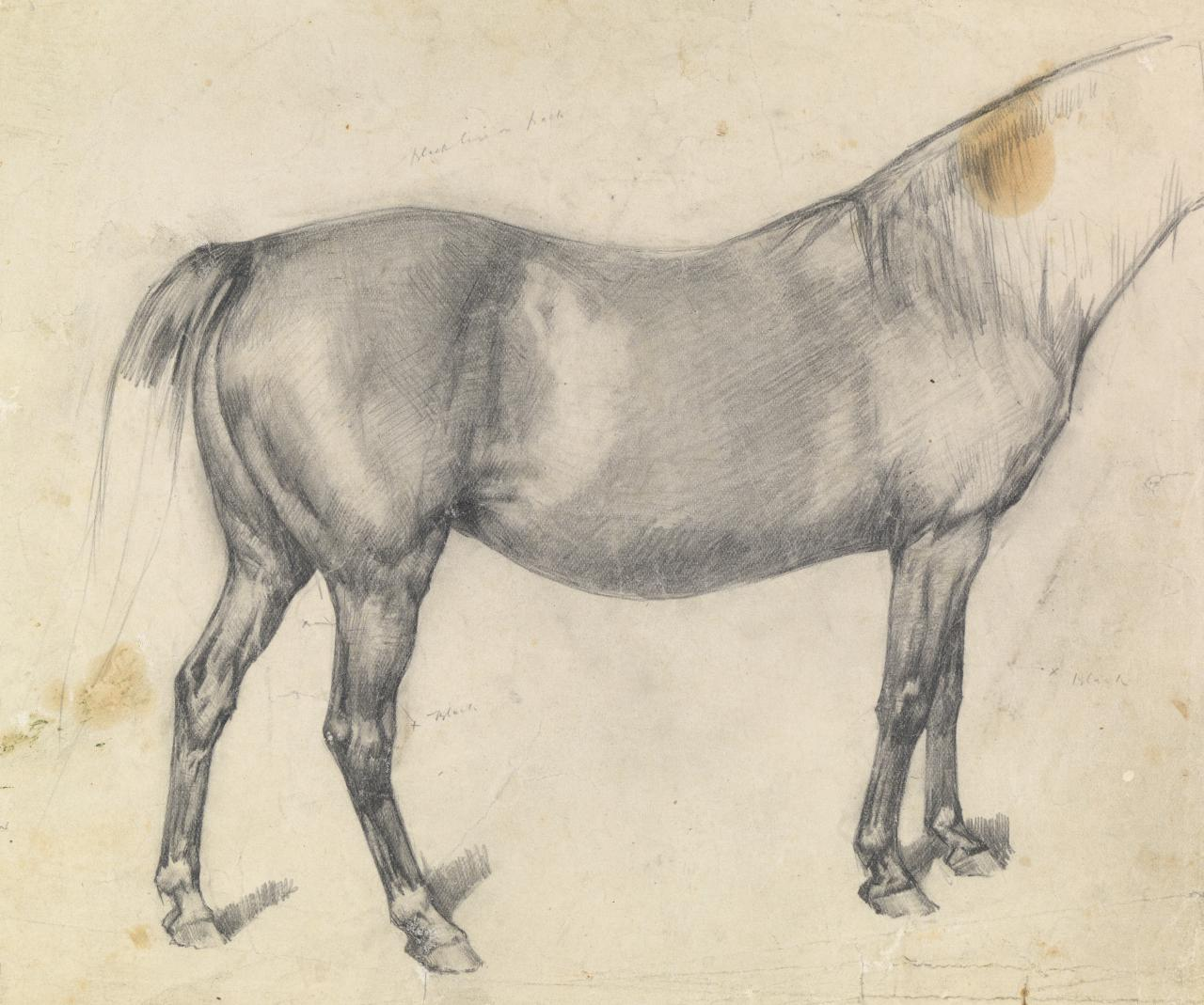 Study of a brood mare