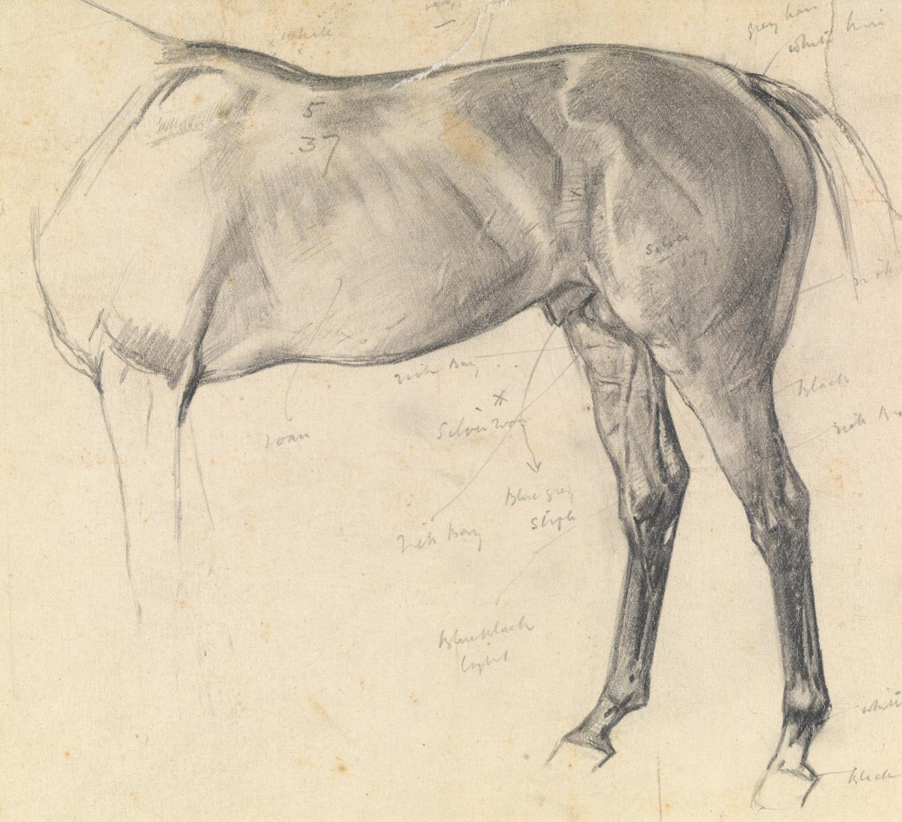 Study of a horse for a painting