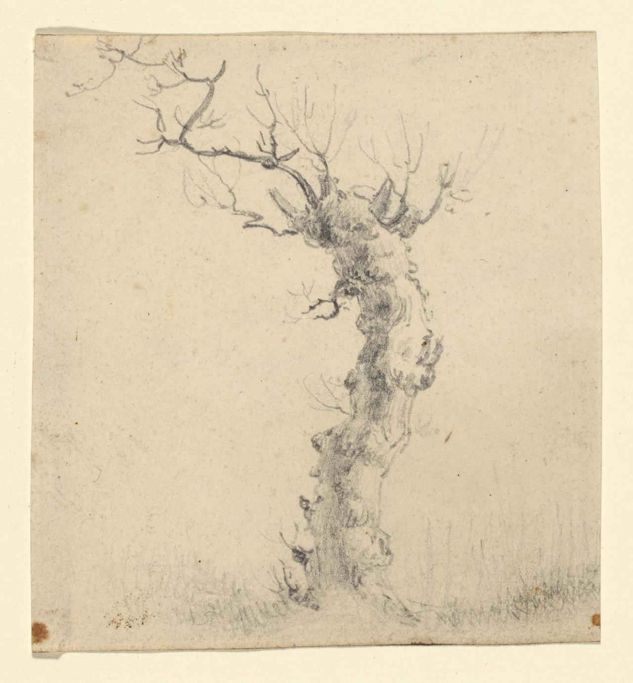 Study of a tree trunk