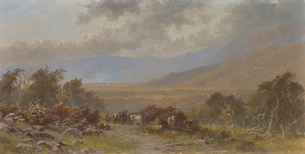 Cattle on the hillside