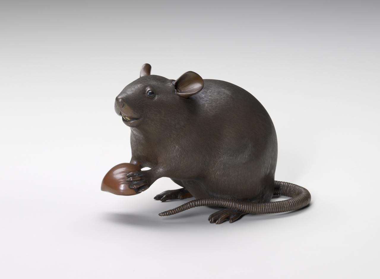 Rat with a chestnut