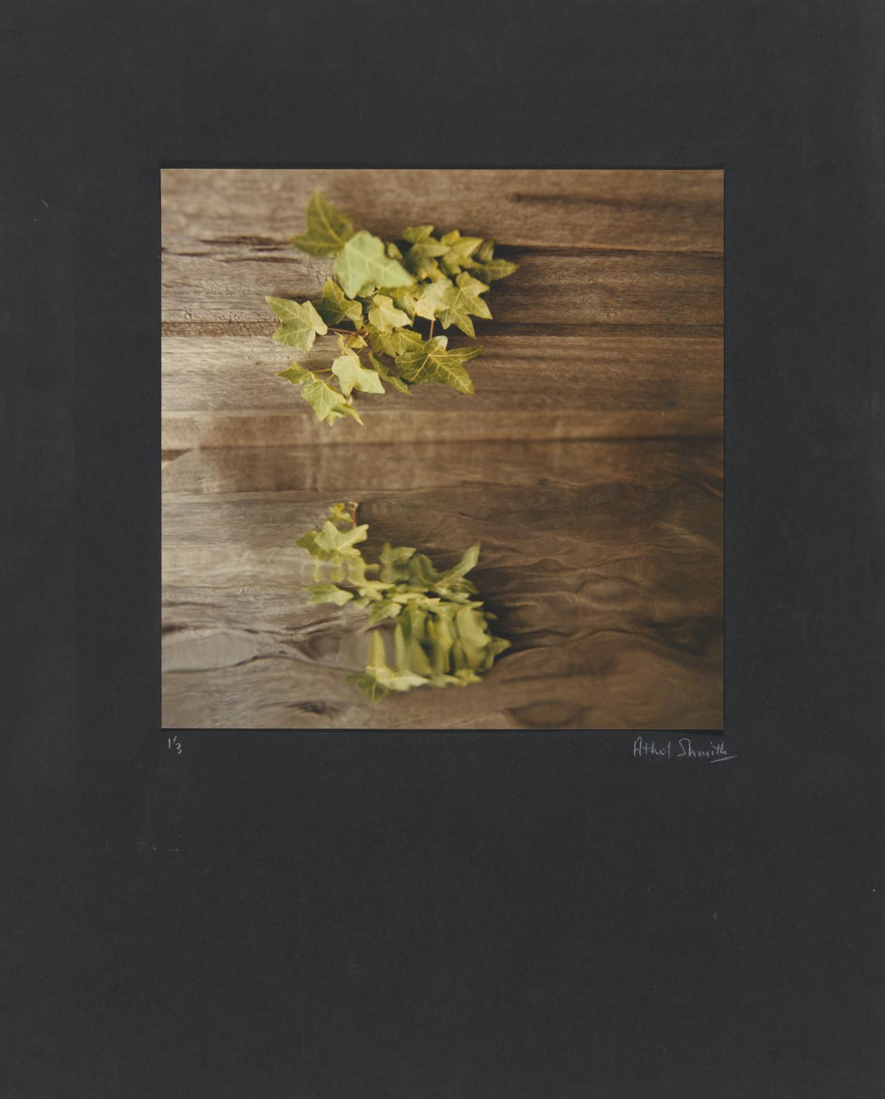 No title (Still life. Ivy on wood)