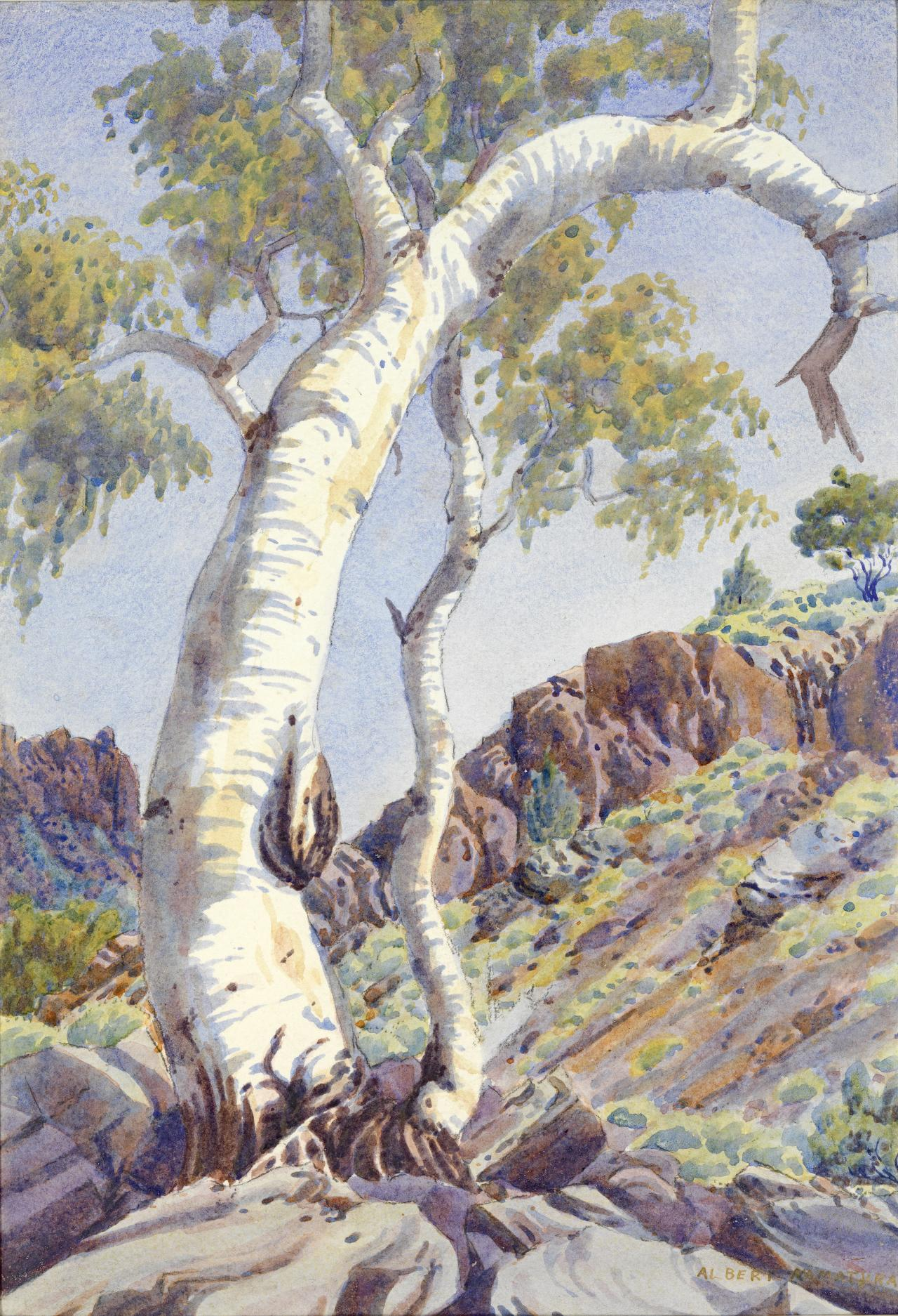 Ghost Gum, MacDonnell Ranges, Central Australia