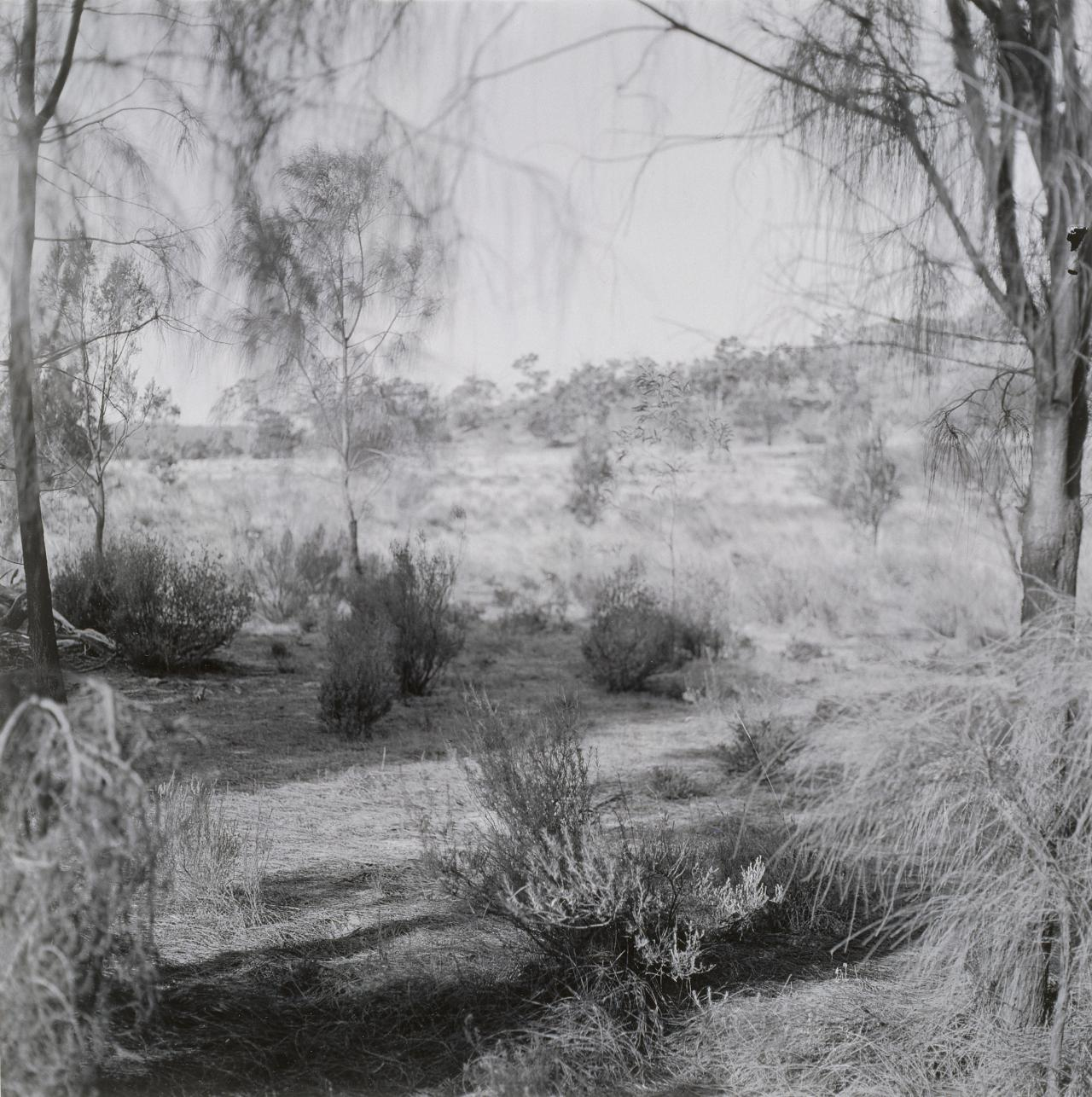 No title (Landscape with bush in centre foreground) from the Black Range series, 1986-96