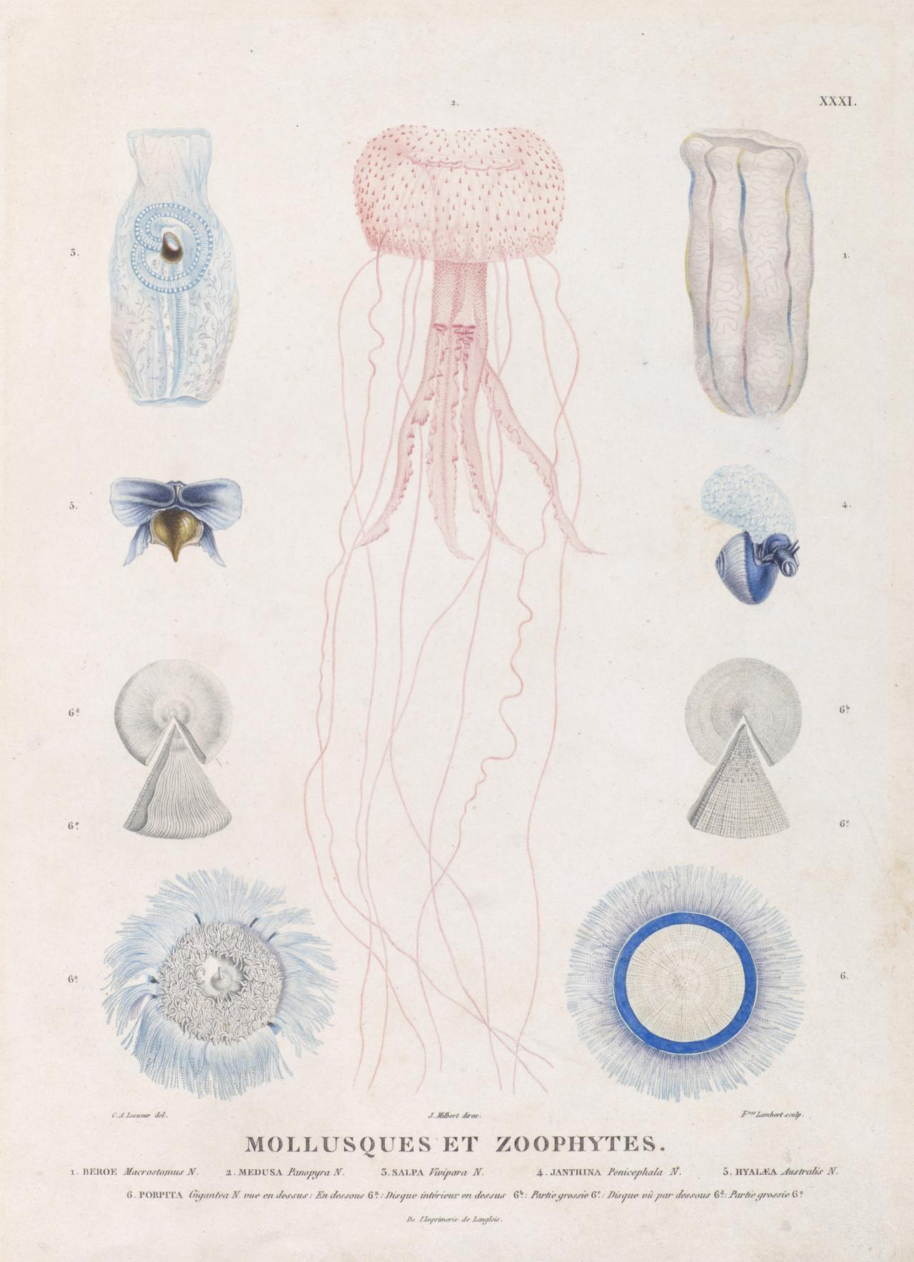 Molluscs and zoophytes