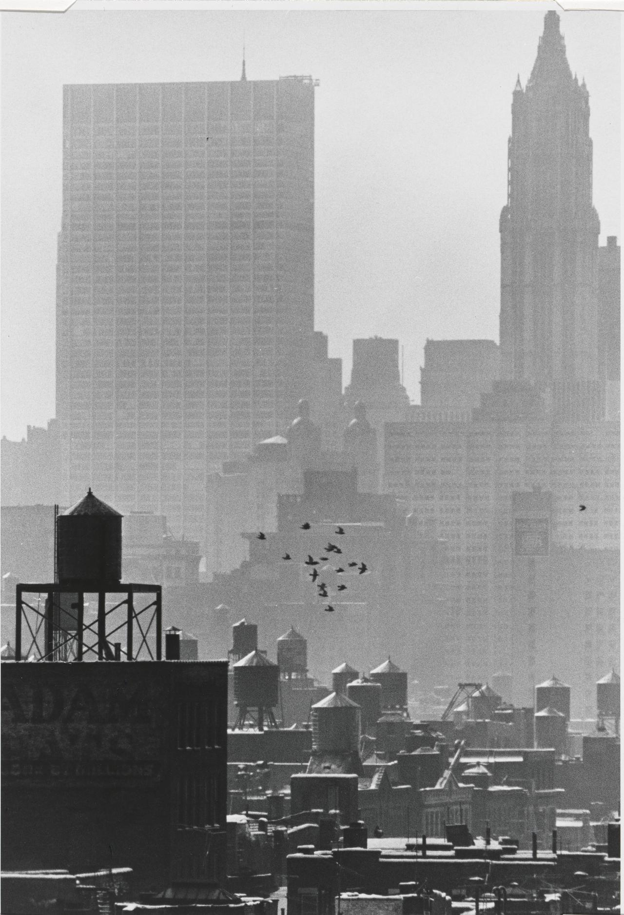 Pigeons over Wall Street, January 27
