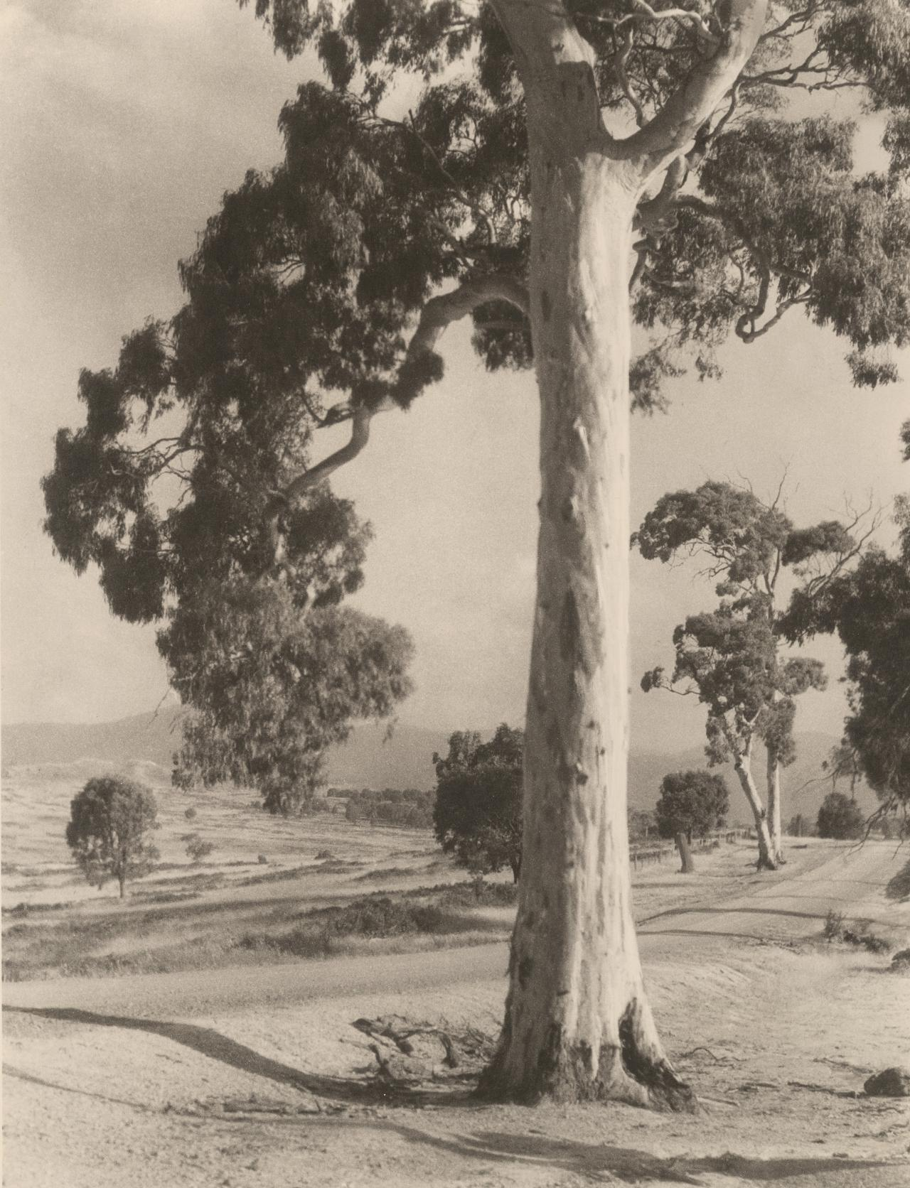 Summer day near Alexandria, Goulburn Valley