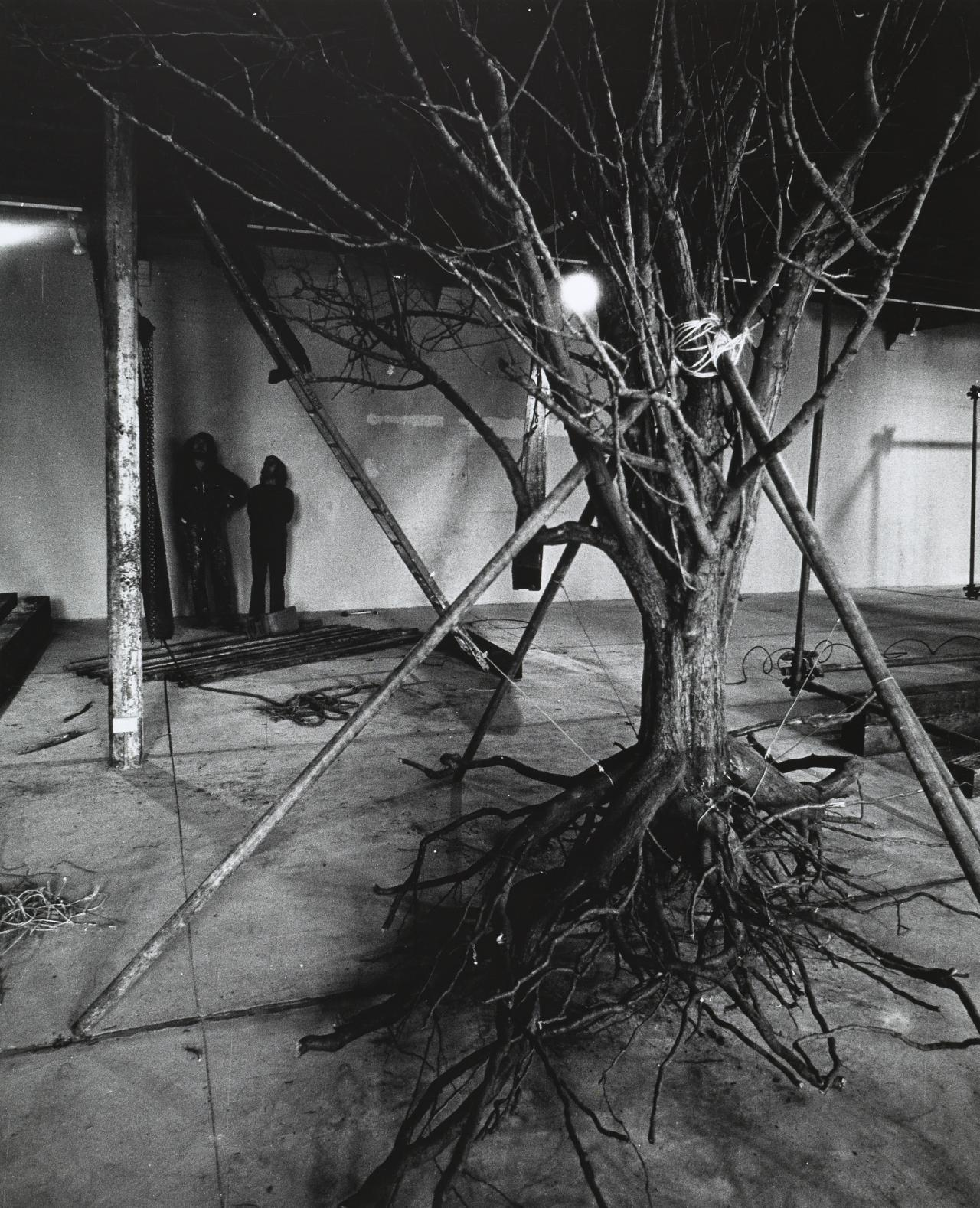No title (Event for amplified man / tree and laser at Pinacotheca Gallery, 25 and 26 August 1972)