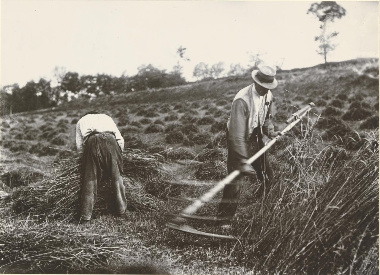 Harvesters, Somme