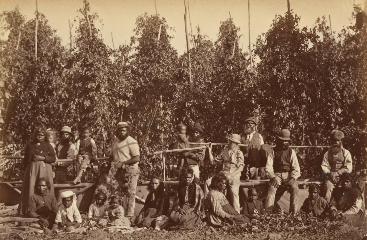 Group of Aborigines in hop gardens, Coranderrk