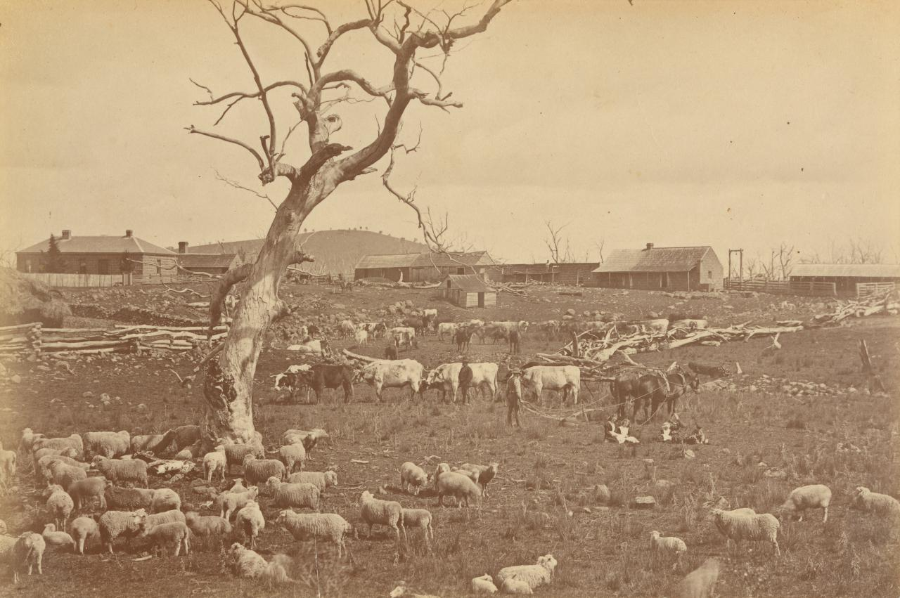 Sheep and cattle station Merriang, near Woodstock