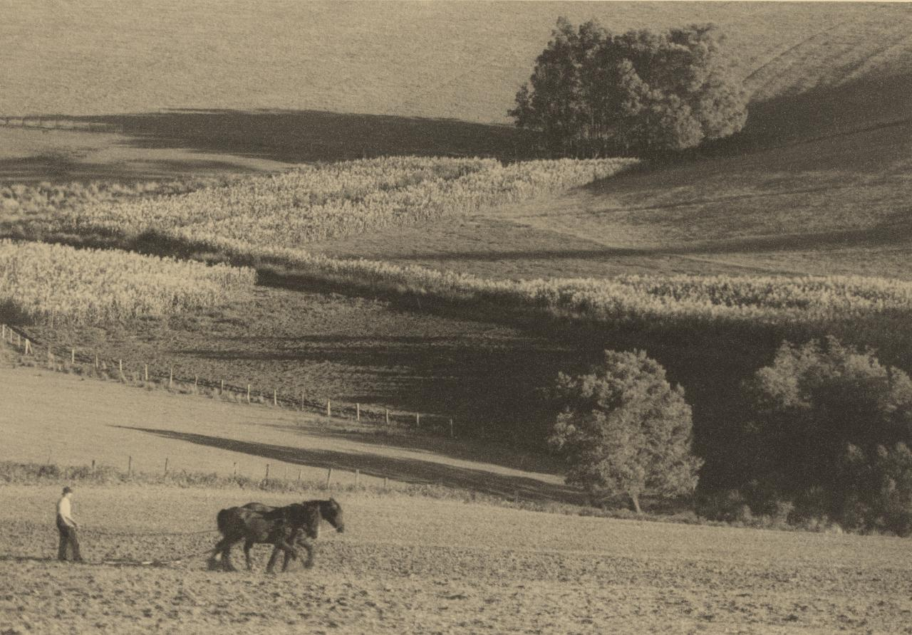 No title (Man ploughing field with horses, South Gippsland hills)