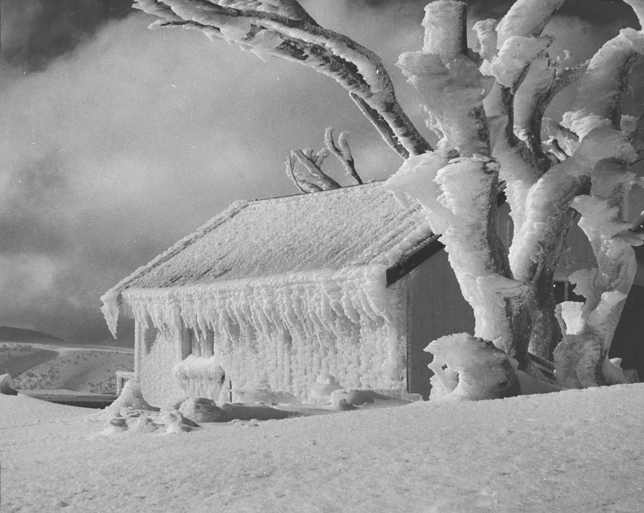 No title (Snow covered trees and hut)