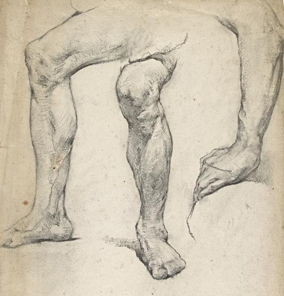 Studies of limbs
