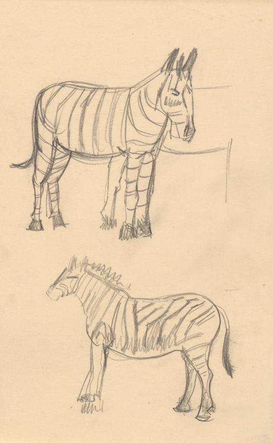 Zebra sketches