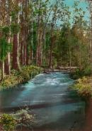 Batts Bend, River Watts, Fernshaw